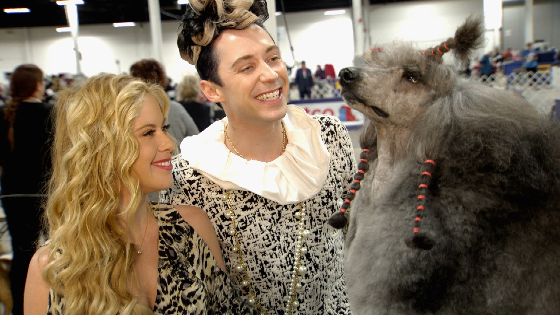tara lipinski johnny weir learn about poodle grooming at