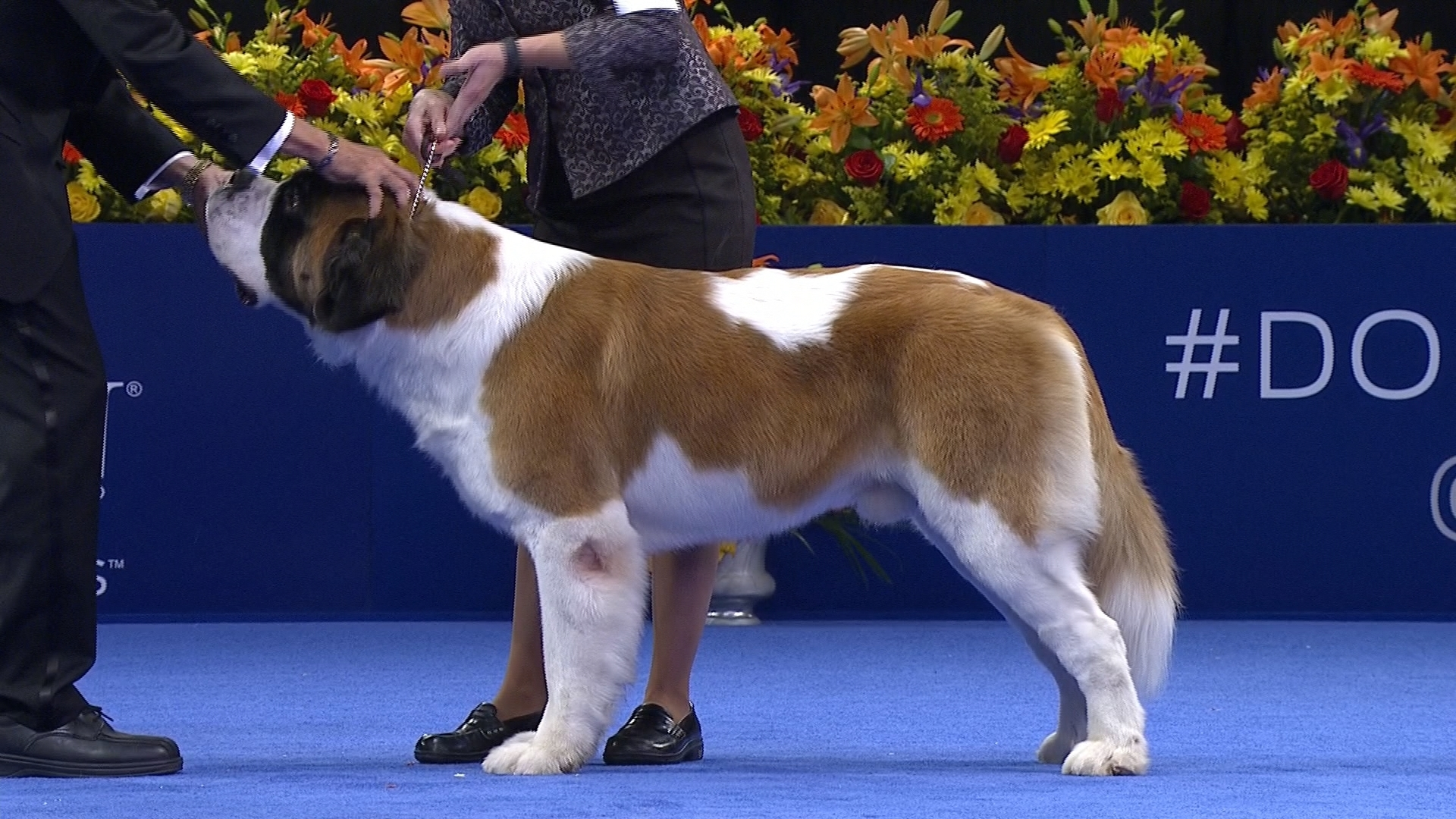 National Dog Show  Video