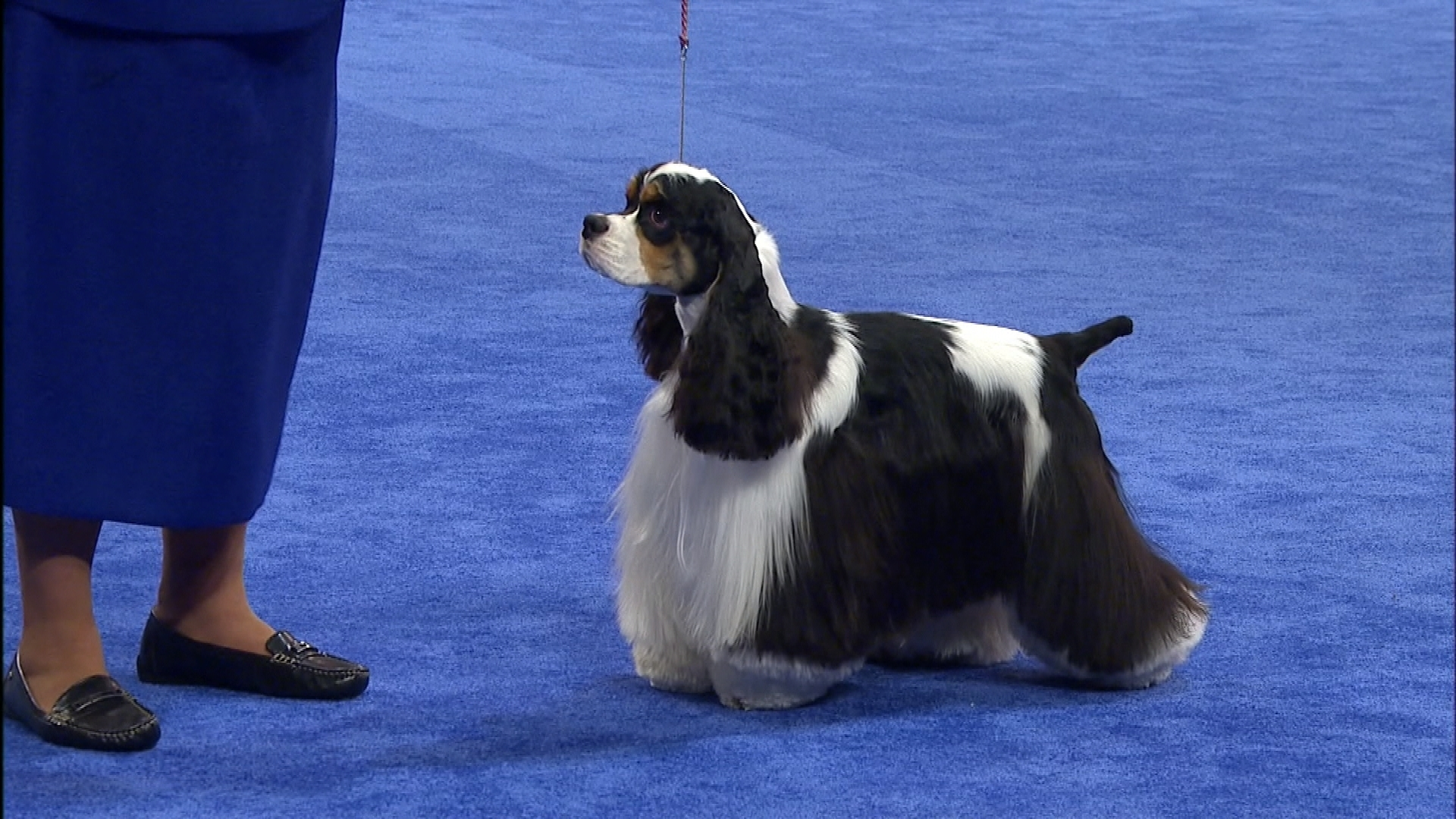National Dog Show Sporting Group