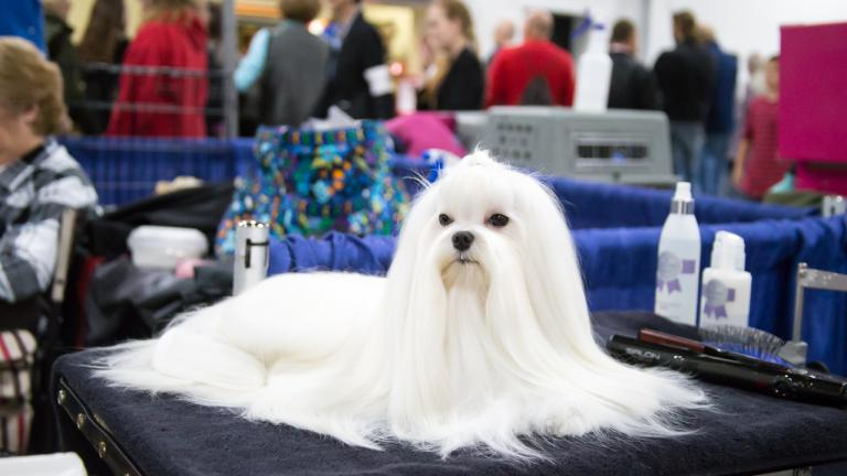 Behind the scenes at the 2015 National Dog Show