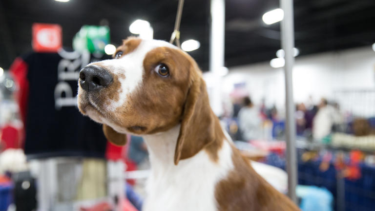 Behind the scenes at the 2016 National Dog Show