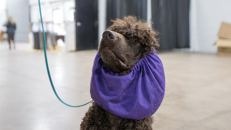 Behind the scenes at the 2018 National Dog Show